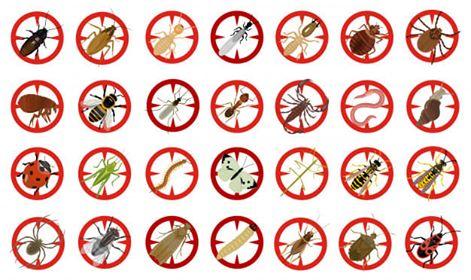 شركة مكافحة حشرات بالطائف,مكافحة حشرات بالطائف,مكافحة النمل الابيض بالطائف,مكافحة الصراصير بالطائف